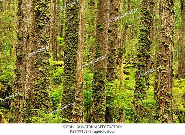 SGang Gwaay Island, UNESCO World Heritage site, Gwaii Haanas National Park- Pacific coast rainforest, Haida Gwaii (Queen Charlotte Islands) , British Columbia