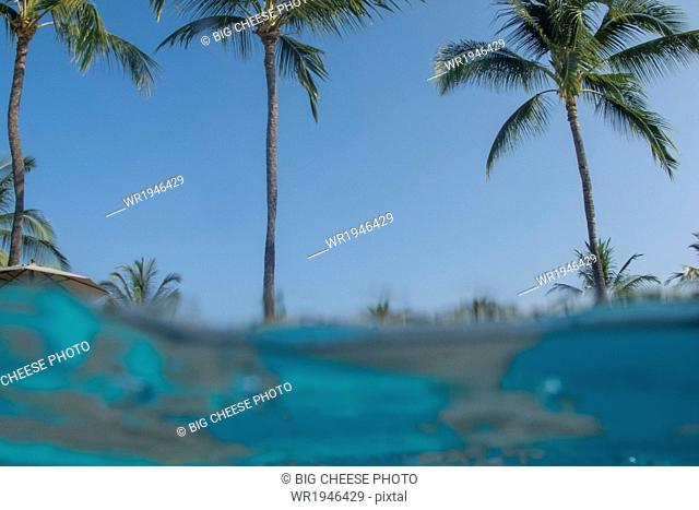 View of palm trees from a swimming pool