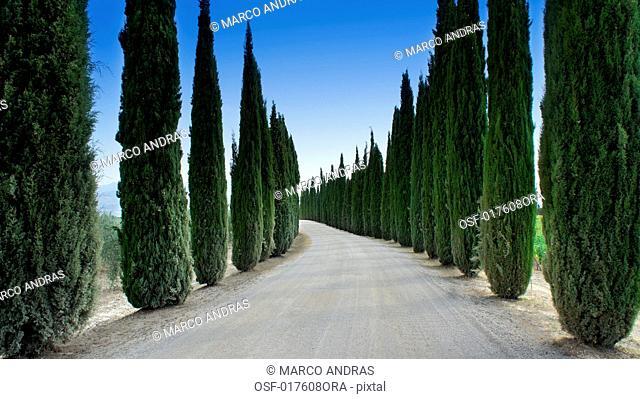 Italy, Tuscany. Montalcino