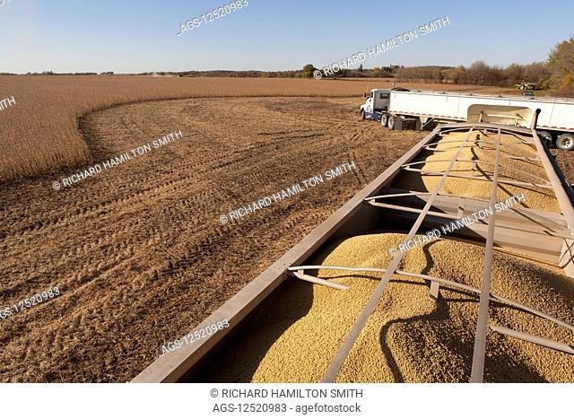 Truckload of soybeans at harvest, near Nerstrand; Minnesota, United States of America