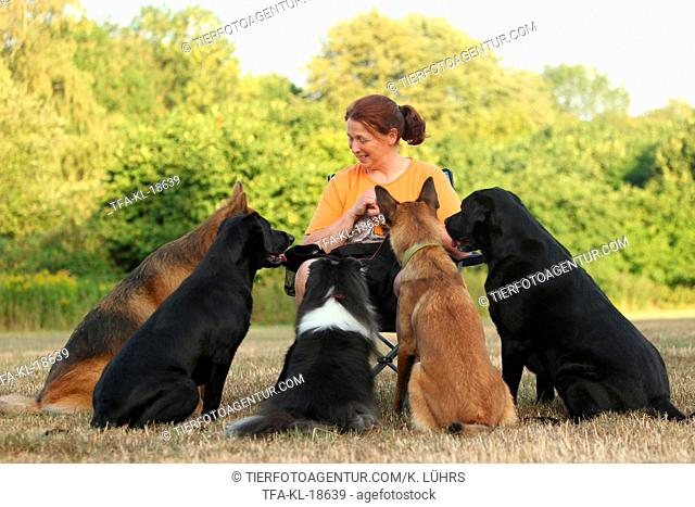 woman and 5 dogs