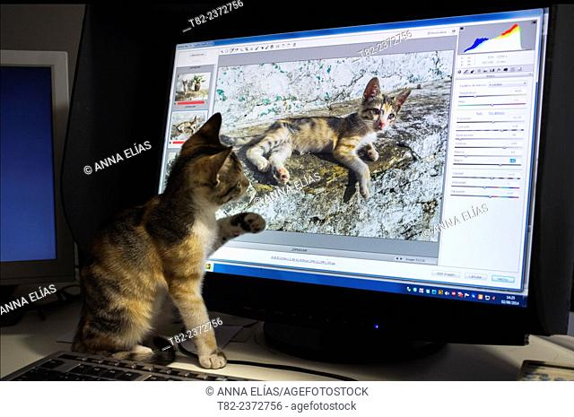 cat recognizing its own photo on the computer