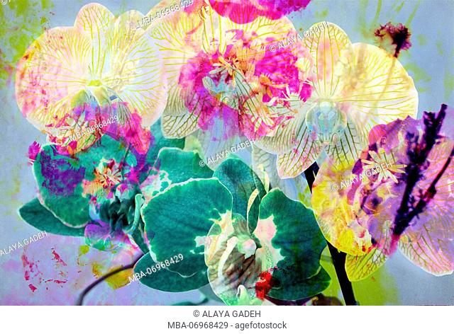 photomontage, orchid, flowers, detail