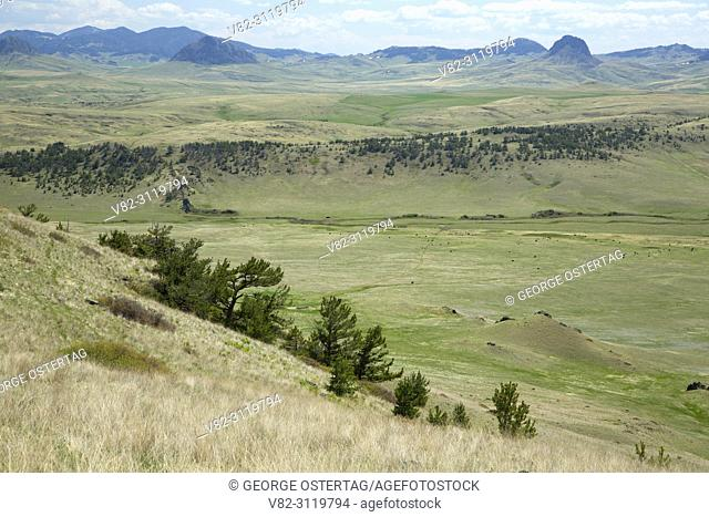 Prairie with pine, Crown Butte Preserve, Montana