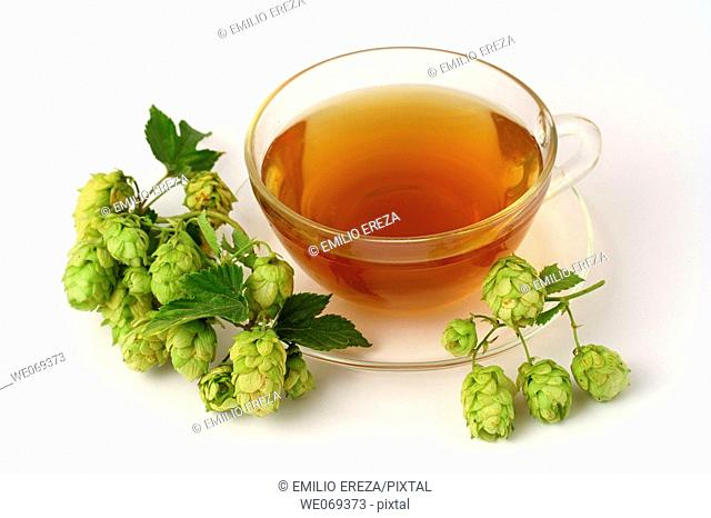 Hops (Humulus lupulus) infusion