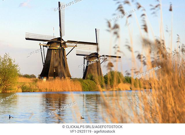 Traditional Dutch windmills Unesco World Heritage Site Kinderdijk Molenwaard South Holland The Netherlands Europe