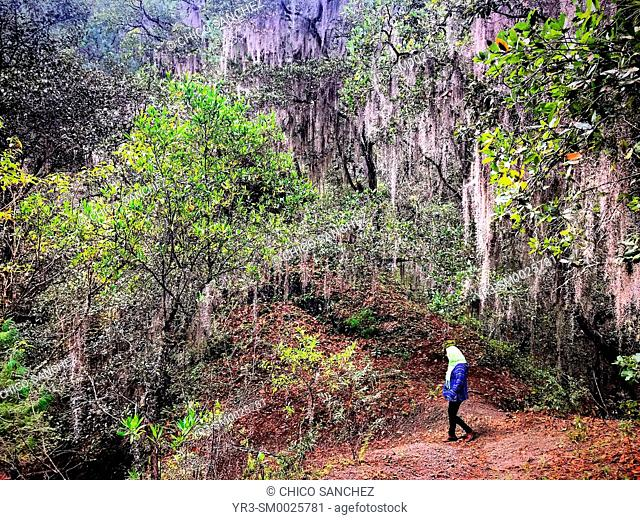 A Mexican woman walks in a forest in Lachatao, in the Sierra Norte of Oaxaca, Mexico