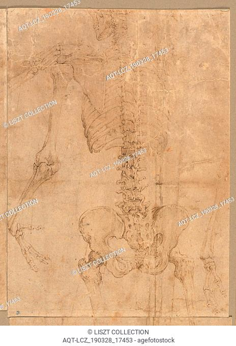 Upper Half of Skeleton from the Back, early 1540s. Battista Franco (Italian, c. 1510-1561). Pen and brown ink; sheet: 24 x 17