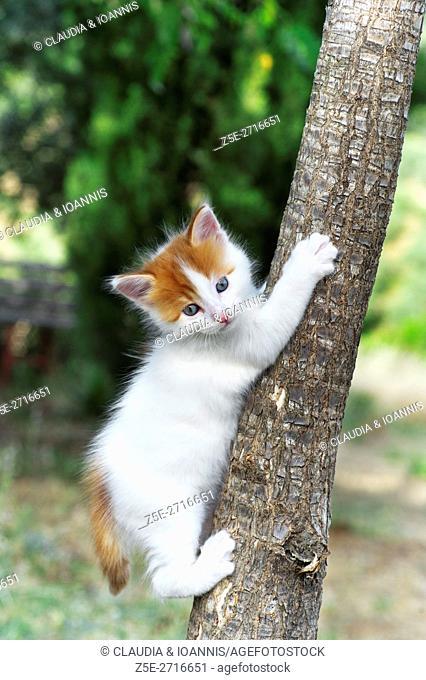 Kitten climbing on a tree