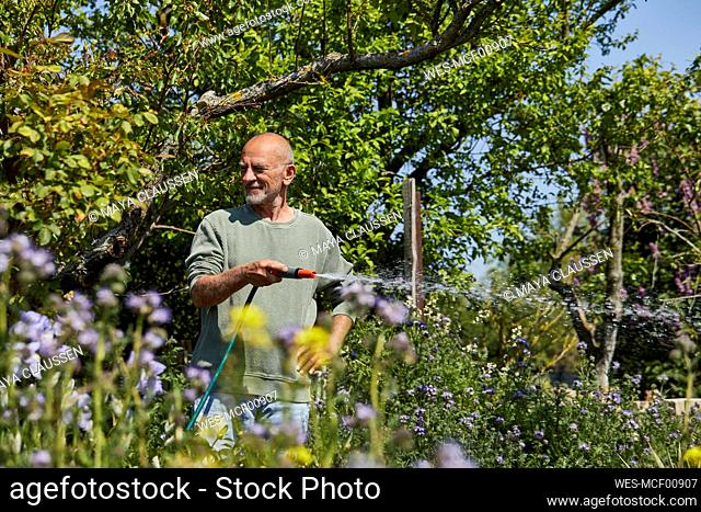 Senior man watering flowers in allotment garden