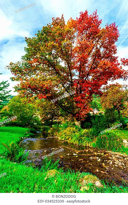 Vivid colors of autumnal nature, red oak on the river, french countryside