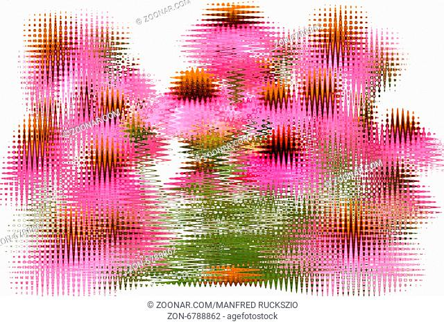 Roter Sonnenhut; Echinacea; purpurea; Roter Sonnenhut; Echinacea; purpurea; Schwingungen, Foto-Effekt