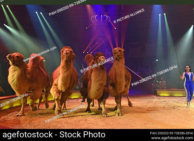 """01 February 2020, Bavaria, Munich: Jana Mandana Lacey-Krone shows her skills with camels at the premiere of the 2nd winter programme under the motto """"""""My Circus..."""