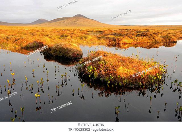 Bog Pools On Dubh Lochan Trail The Flows Forsinard RSPB Reserve Caithness Highland Scotland UK