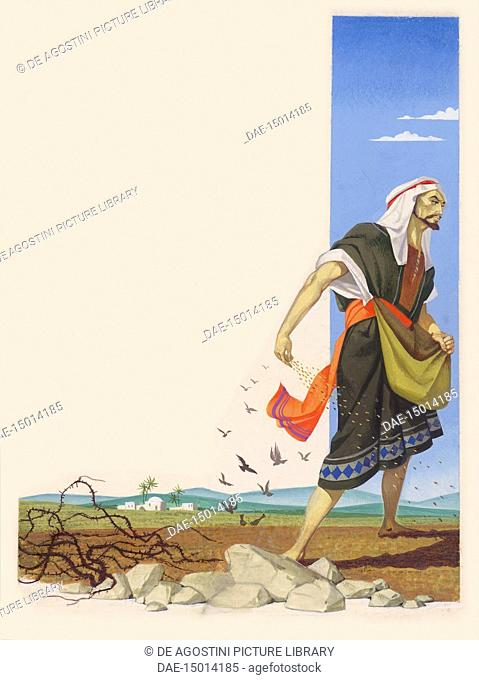 The parable of the sower Stock Photos and Images   age fotostock