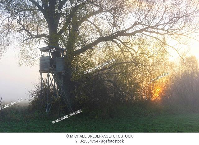 Hunting Blind in misty landscape at sunrise, Hesse, Germany, Europe