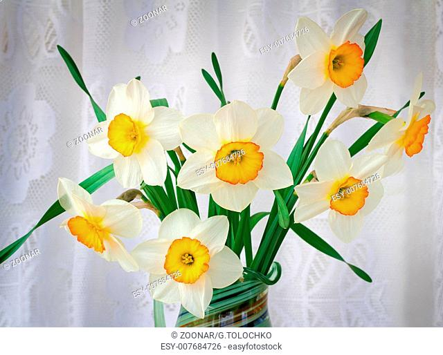 Blossoming narcissuses in a vase on a table