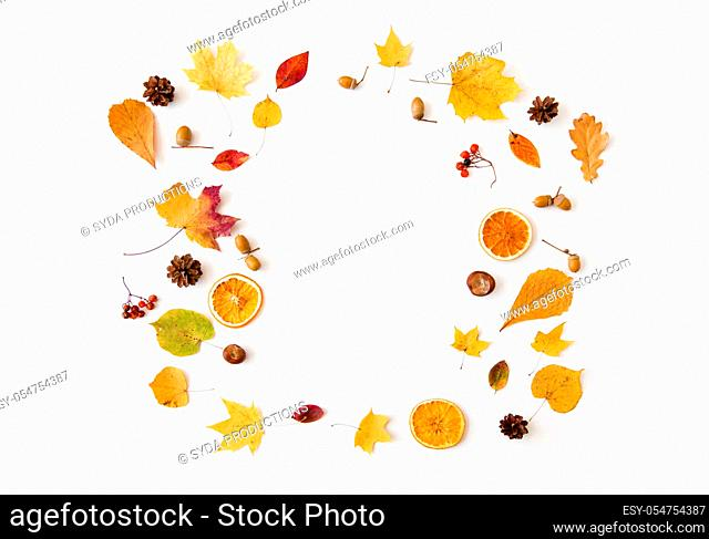 autumn leaves and berries arranged in frame