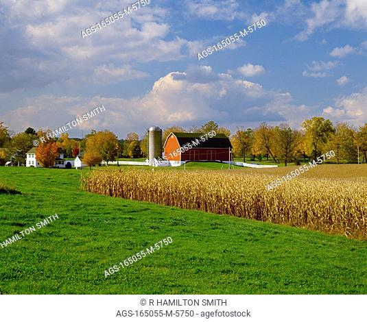 Agriculture - Mature, harvest ready grain corn fields, with grass strips between, in late afternoon light, and a farmstead in the background / WI - nr