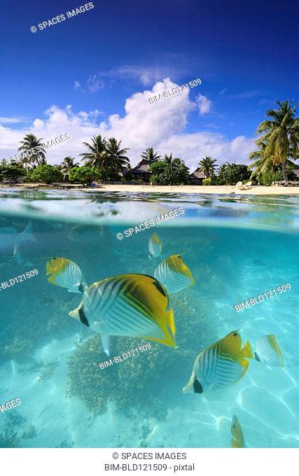 Colorful fish swimming in tropical water, Bora Bora, French Polynesia