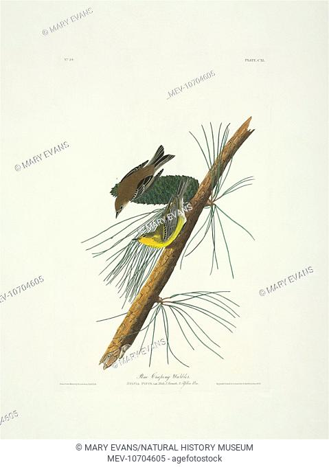 Plate 140 from John James Audubon's Birds of America, original double elephant folio (1831-34), hand-coloured aquatint. Engraved, printed and coloured by R