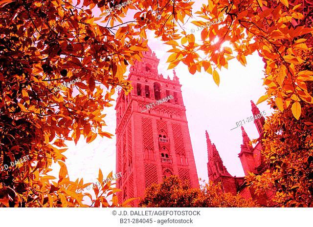 Giralda. Sevilla. Spain