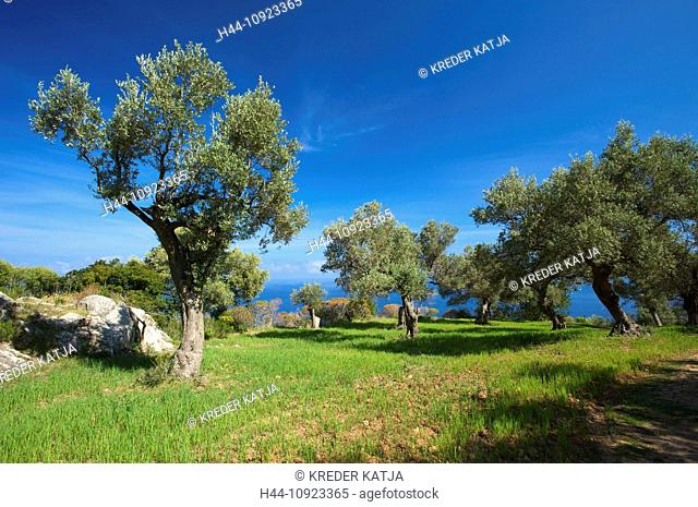 Majorca, Mallorca, Balearic Islands, island, isle, islands, isles, Spain, Europe, Spanish, Europe, European, outdoors, Outside, day, nobody, Saturday Foradada