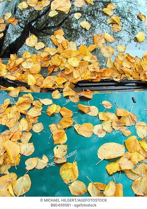 Autumn, beginning of autumn, autumnal colours, autumn month, autumn leafs, tree, car, Kiel, Schleswig-Holstein, Germany