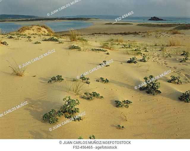 Corrubedo dunes. National Park. Coruña. Spain