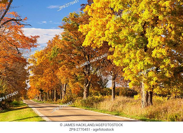 A tree lined road displaying autumn colours near Paris, Brant County, Ontario, Canada