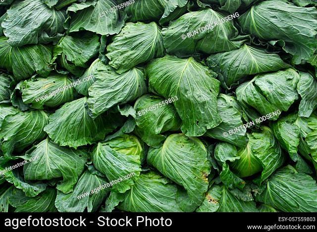 organic cabbage arranged on truck for transportation