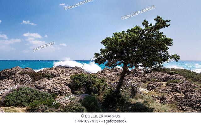 Tree, surf, bay, Cupressus sempervirens, rock coast, Greece, Europe, sky, Kandanos-Selino, Crete, coast, Mediterranean, sea, seashore, Mediterranean Sea