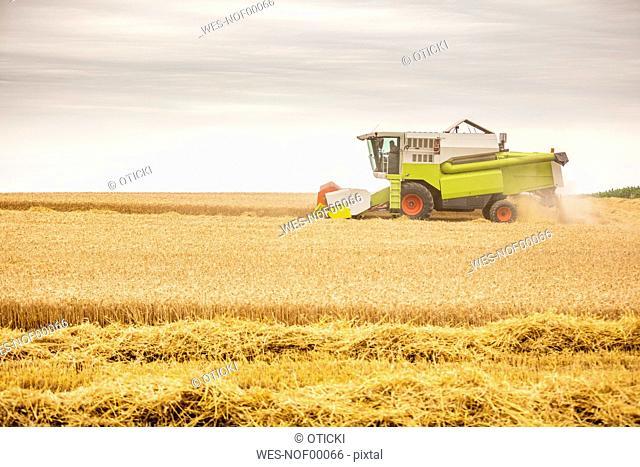 Serbia, Vojvodina, Combine harvesting wheat field
