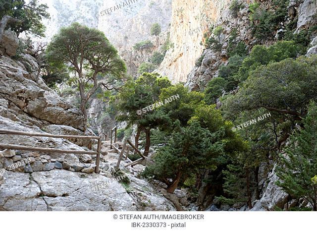 Hiking trail with a railing made of wood, scattered trees, Holm oaks (Quercus ilex), limestone rocks, Rouwas Gorge, Ida Mountains, near Ano Zaros, Crete, Greece