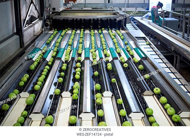 Green apples in factory being sorted