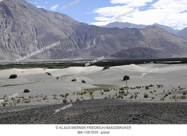 River dune landscape in the High Alps of the Shyok Valley near the Hundar oasis, Nubra Valley, Ladakh, Jammu and Kashmir, North India, India, Asia