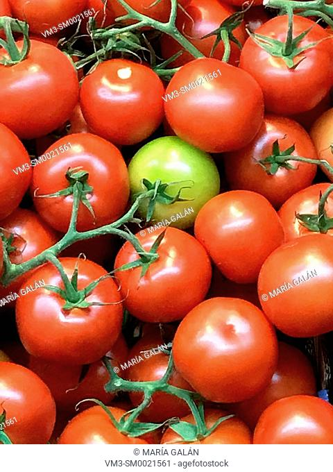 Green tomato among red tomatoes