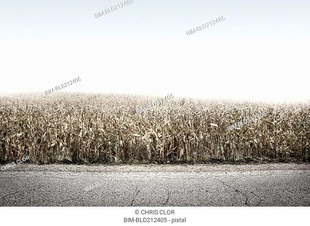 Crop field growing along rural road