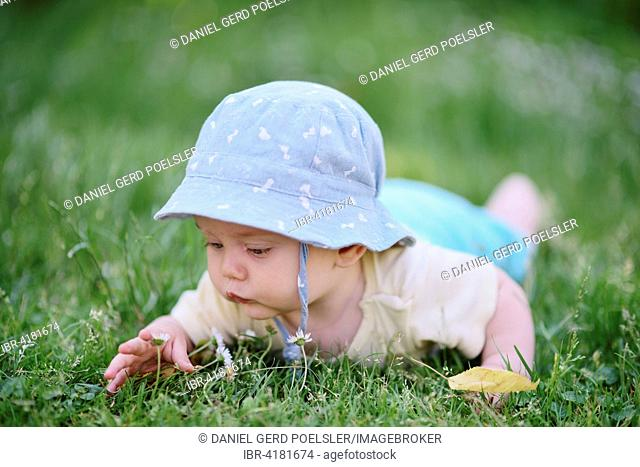 Baby boy, 5 months, in the grass, looking at daisies, Austria
