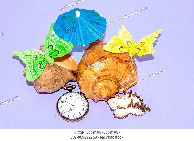 Seashell and watches