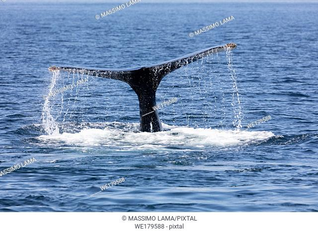 Whale in Provincetown, Cape Cod, Massachussetts, United States