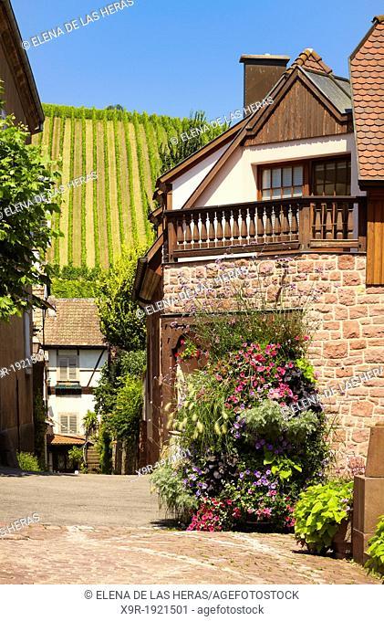 Riquewihr  Alsace wine route  Haut-Rhin  Alsace  France