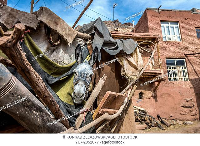 Donkey in shelter in famous red village Abyaneh, Natanz County, Isfahan Province in Iran