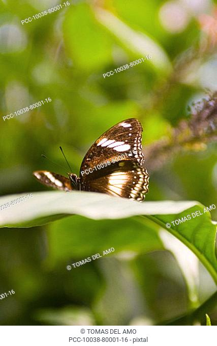 A beautiful brown butterfly rests on a green leaf