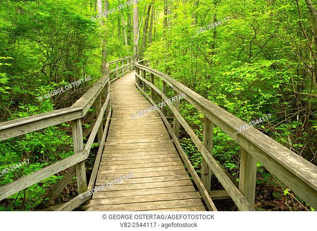 Boardwalk trail, Great Swamp National Wildlife Refuge, New Jersey