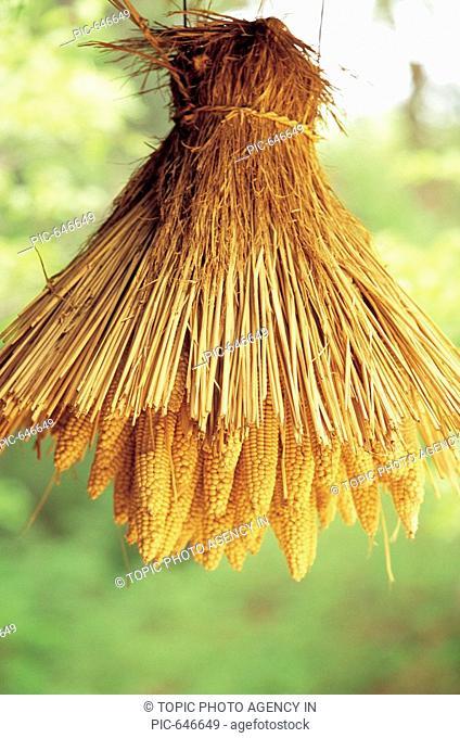 Drying Corn,Korean Folk Village,Yongin,Gyeonggi,Korea