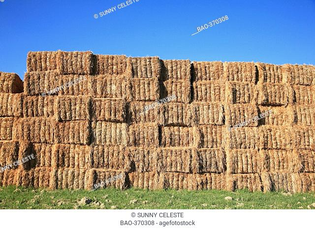 Straw bales stacked on the field