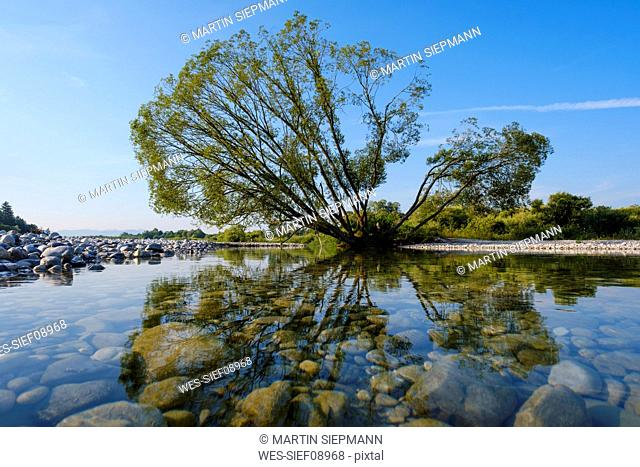 Silver Willow at riverbank of Isar against sky, Nature Reserve Isarauen near Geretsried, Bavaria, Germany