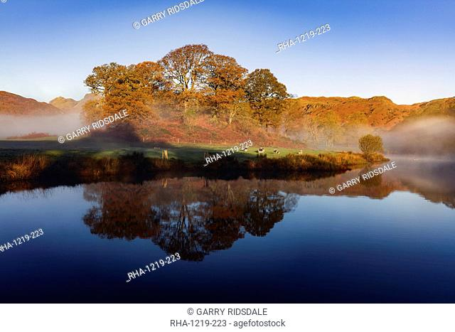 Autumn mists swirl around the coppery red trees on the banks of Elterwater on a calm morning in the Lake District National Park, UNESCO World Heritage Site