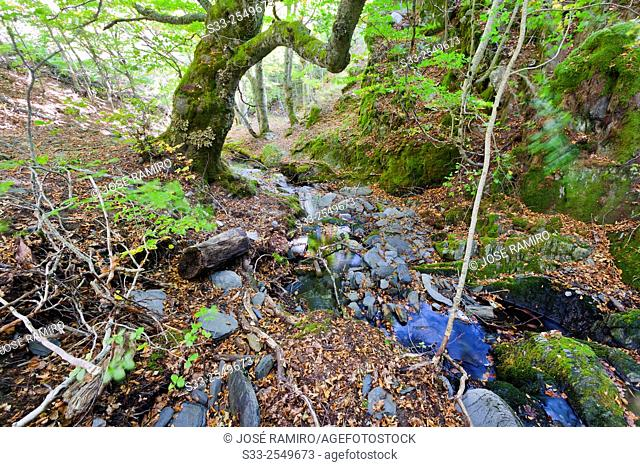Zarza stream in the Tejera Negra Natural Parck. Guadalajara. Castilla la Mancha. Spain. Europe